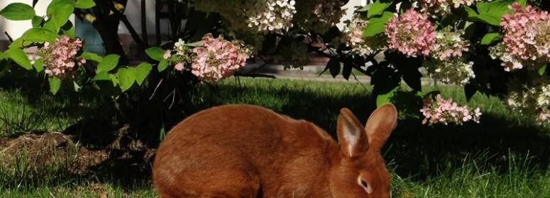 кролик НЗК