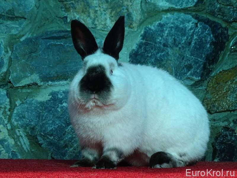 Серьёзный кролик