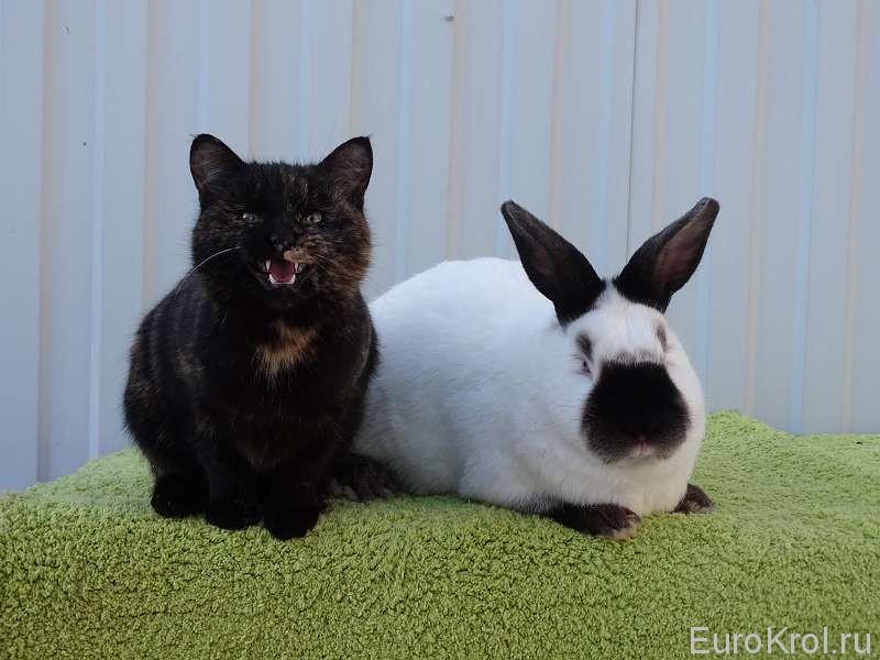 Кролик и кошка