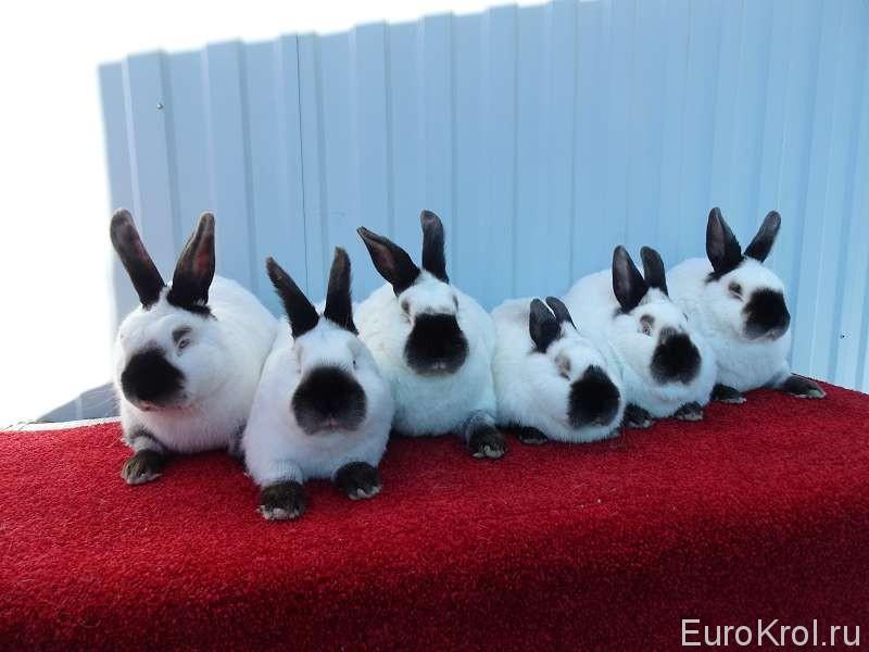 Молодые кролики