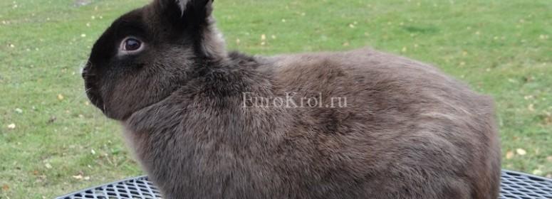 Кролик мардер коричневый