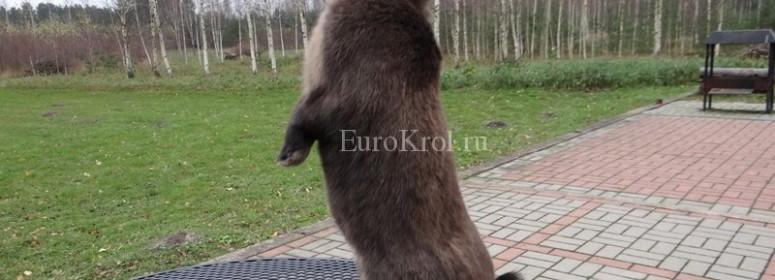 Кролик породы мардер коричневый