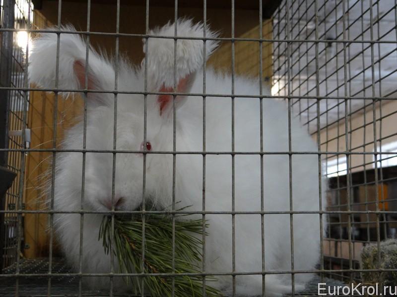 Хвоя для пуховых кроликов