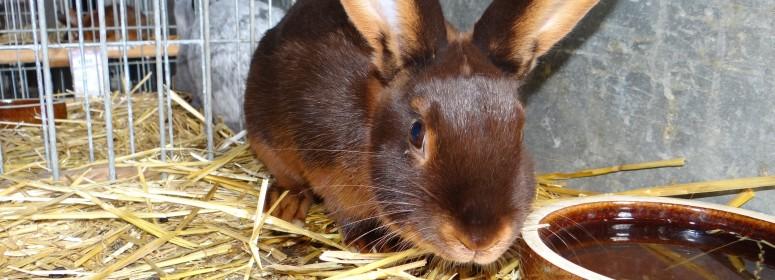 Выставка кроликов Годони
