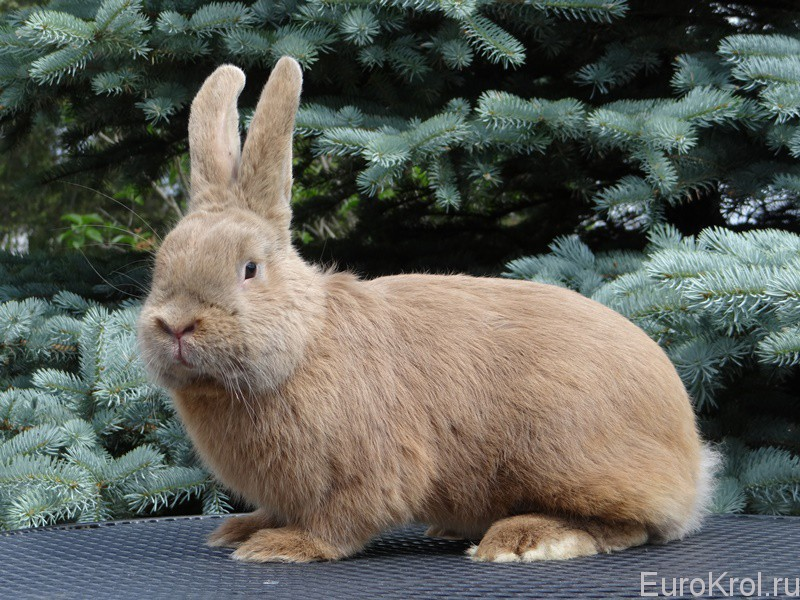 Пастеловый кролик