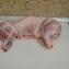 Диетическое мясо кролика