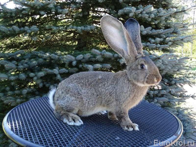 Кролик от Марко Йозефа