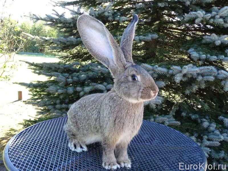Кролик от Марко