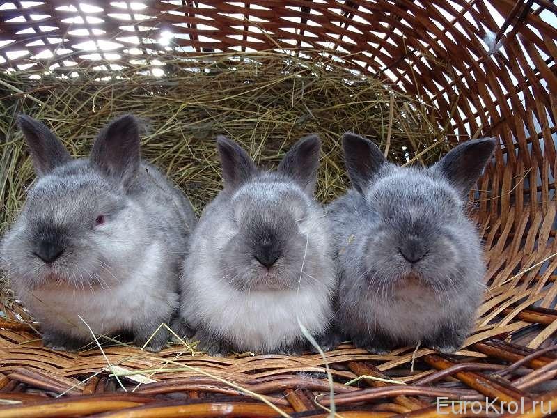 Крольчата в корзинке