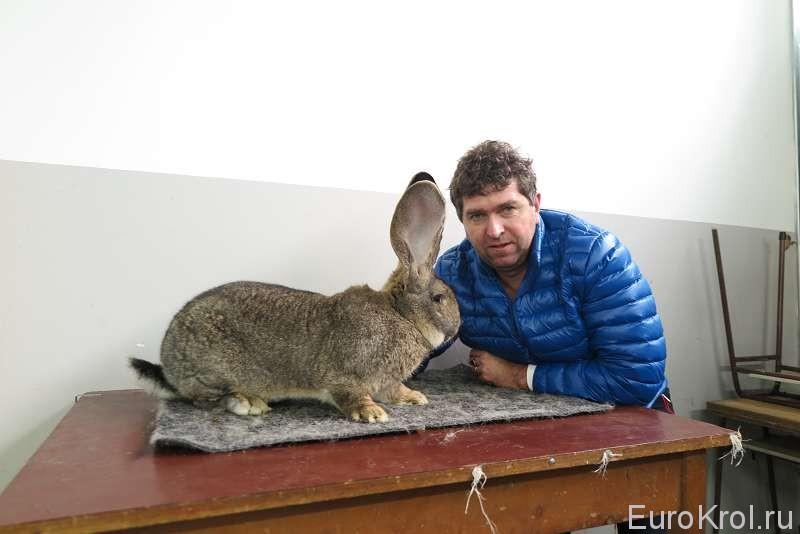 Марко с кроликом великаном