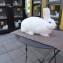 В Германию за кроликами
