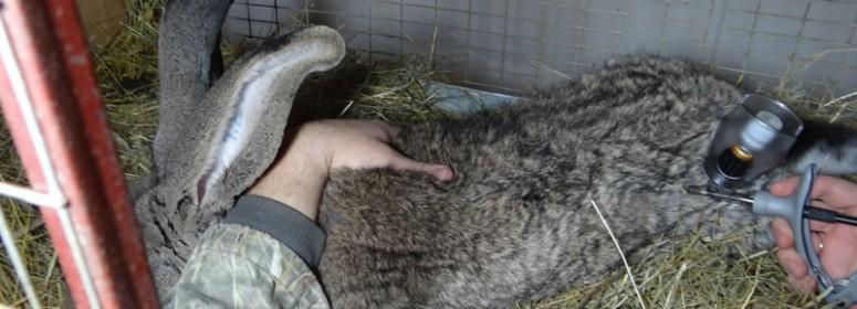 Инъектор для вакцинации кроликов