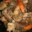 Блюда из кроликов