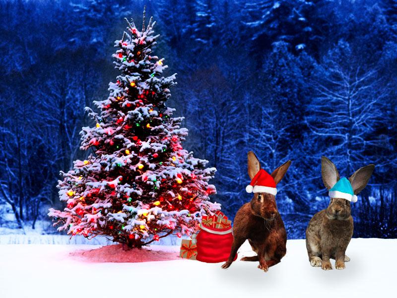 С Новым годом кролиководы!