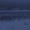 Подсолнухи под снегом