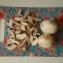 Кролик тушеный с грибами