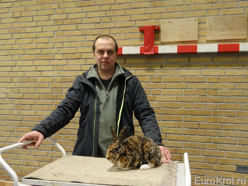 Выставка кроликов рекс в Европе
