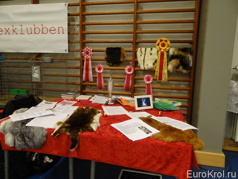 Выставка кроликов в Дании