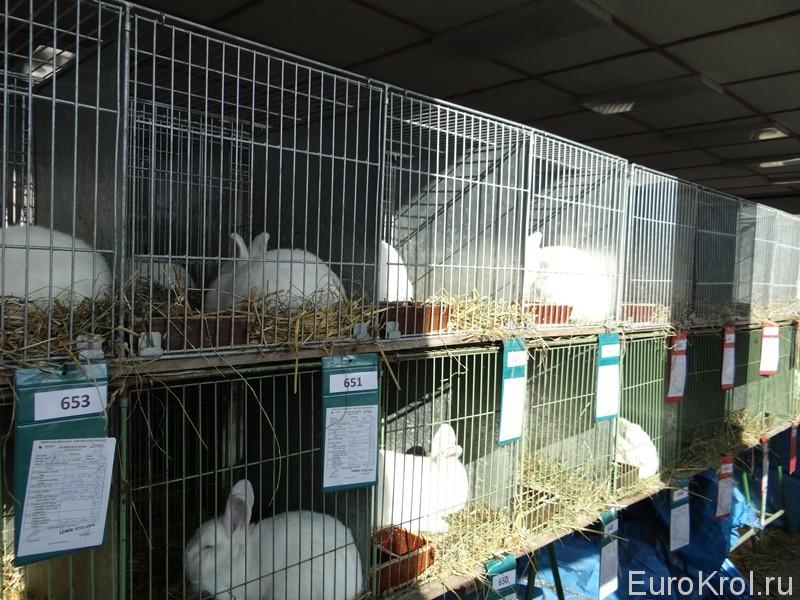 Выставка кроликов в Европе