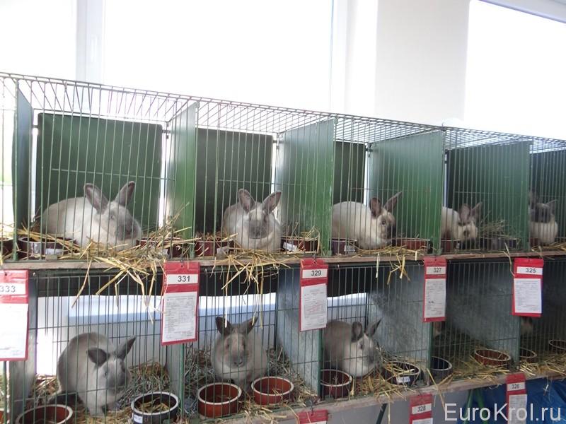 Кролики из Европы
