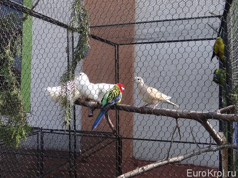 Выставка животных в Чехии