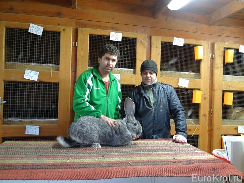 Заводчик кроликов Марк Йозеф