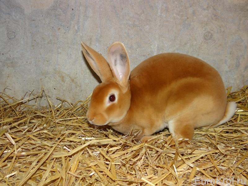 Кролики в Дании