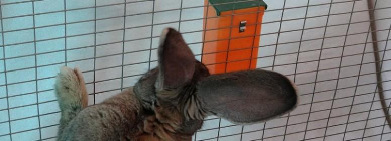Ниппельные поилки для кроликов