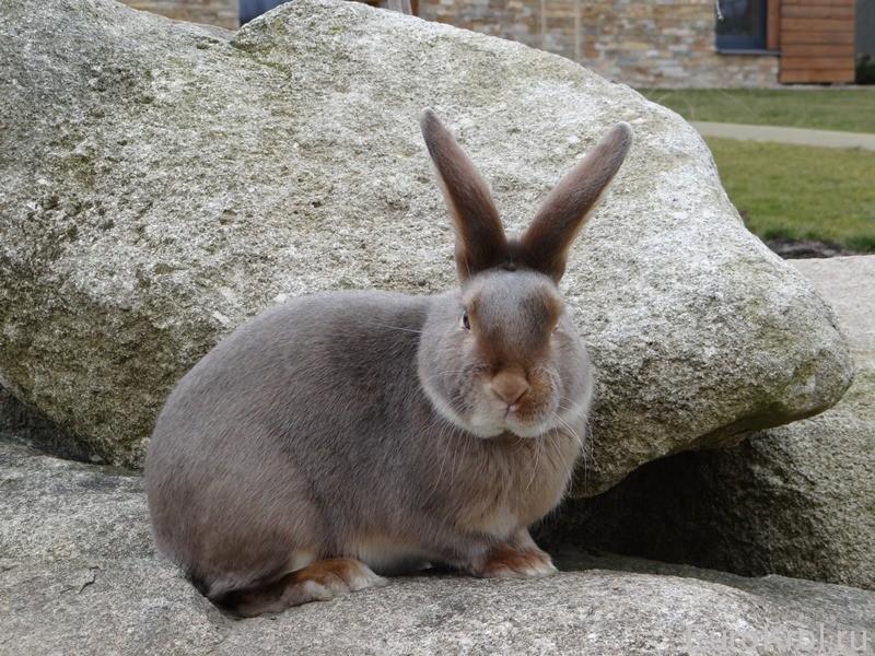 Кролик сатин люкс на камушке
