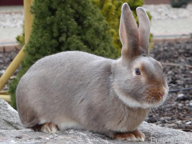 Кролик сатин люкс на камнях
