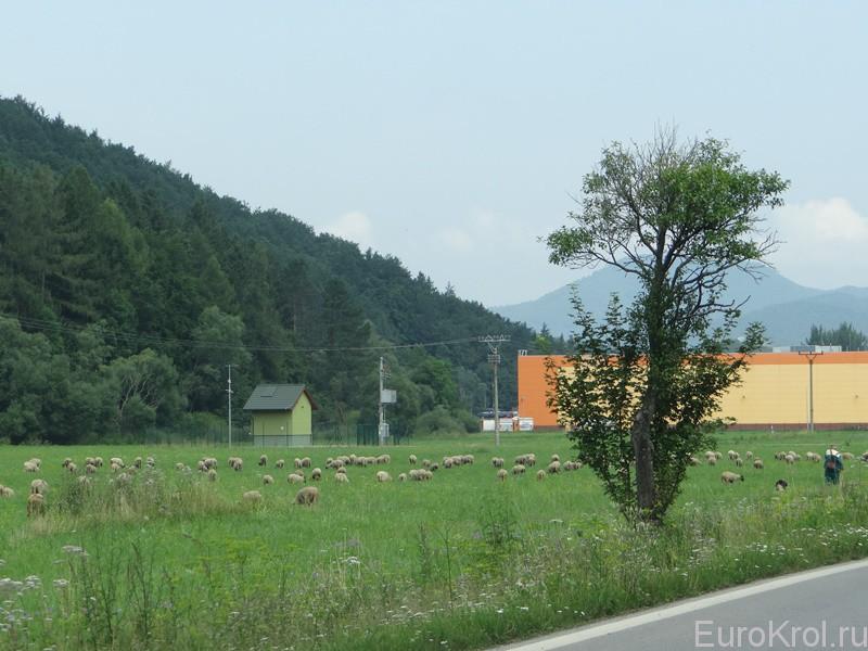 Ферма в Чехии