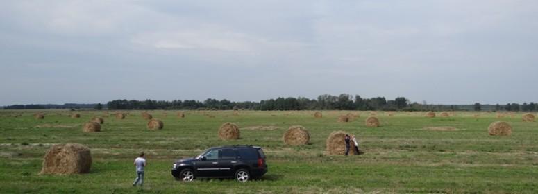 Рулоны сена на полях
