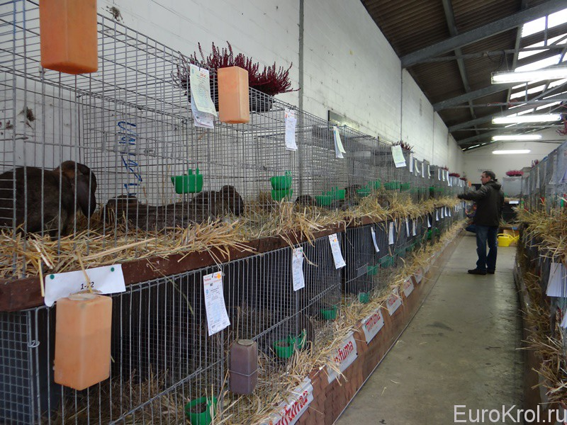 Выставка немецких баранов