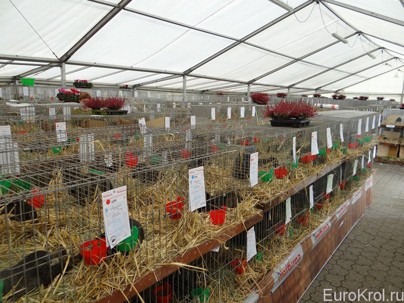 Выставка кроликов в Германии
