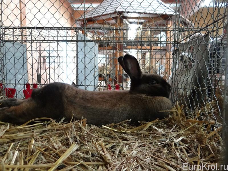 Кролики на выставке в Германии