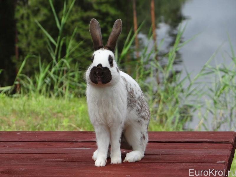 Кролик позирует
