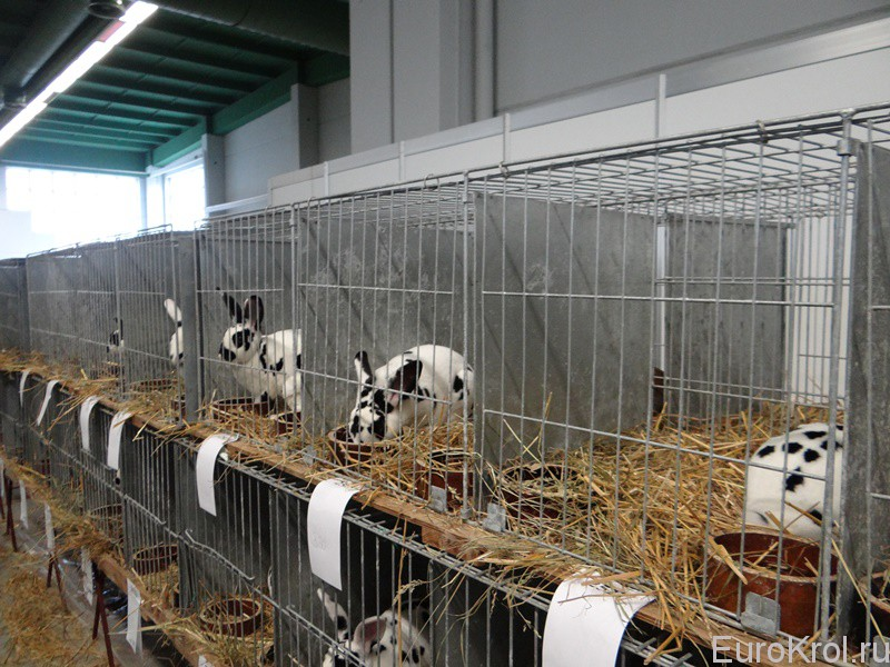 Выставка кроликов в Чехии