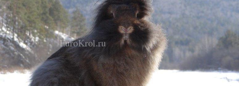 Кролик Belgische Bartkaninchen