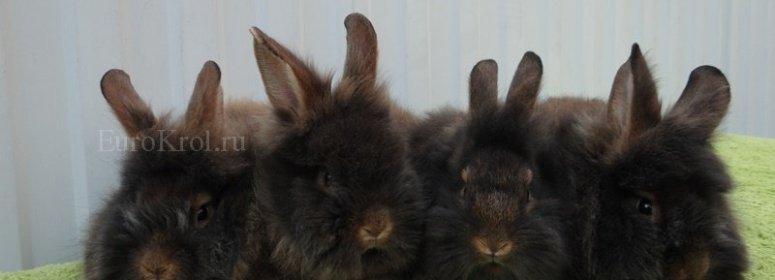 Кролики Бельгийский бородач