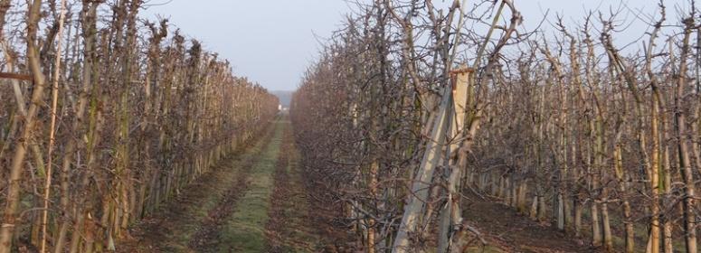 Польша яблоки