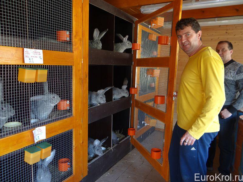 Словакия кролики ризены