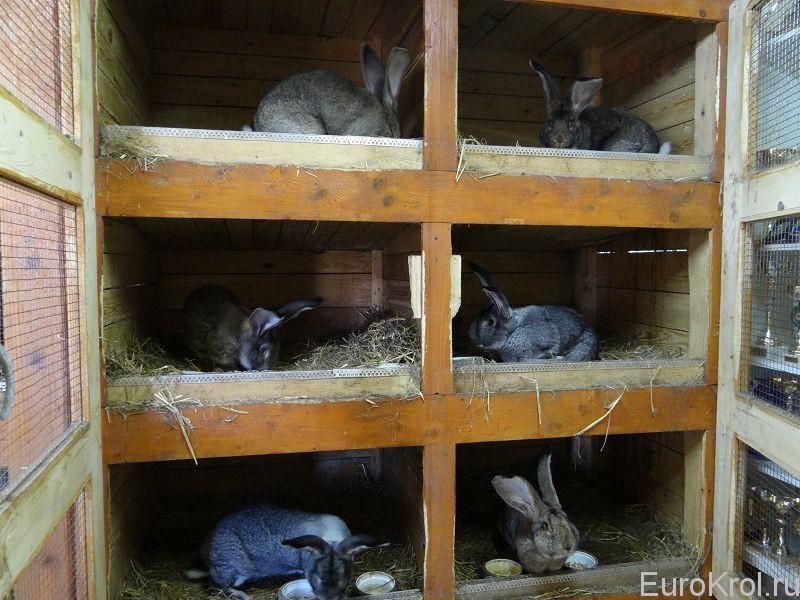 Словакия кролики ризены Марк Йозеф