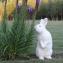 Кролики Словакия