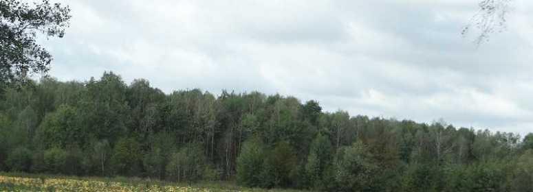 Польша тыквенные поля