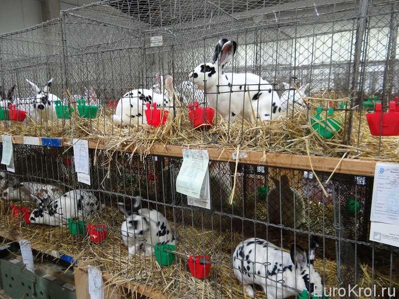 Рексы далматинцы на выставке в Германии
