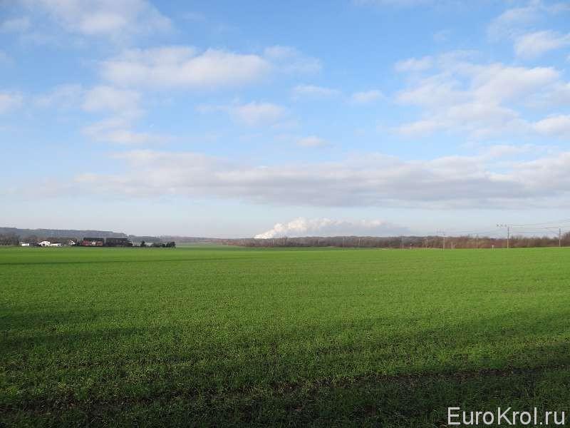 Трава в декабре в Германии