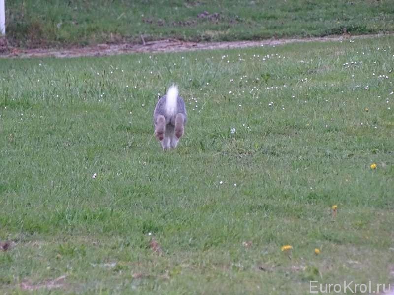 Кролик бежит