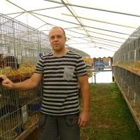 Выставка молодых кроликов