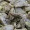 Жареная печень кролика