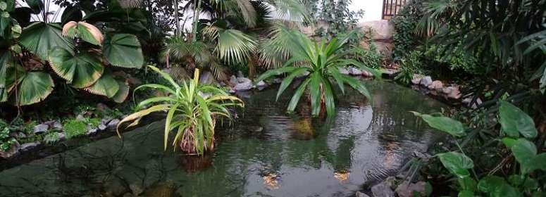 Растения в аквапарке